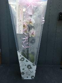 Gift wrapped orchids